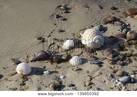 Different shells on the sand, sea background and texture.