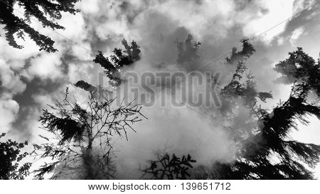Smoke On The Coniferous Tree