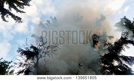 Smoke On The Coniferous Tree