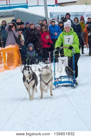 Sled Dog Race In Kharkiv, Ukraine