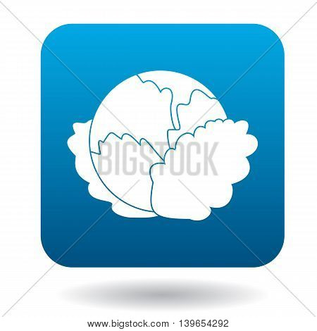 Cabbage icon in flat style on a white background