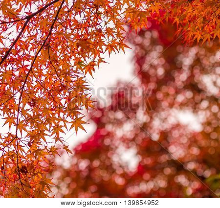 Highly detailed image of autumn leaves very shallow focus
