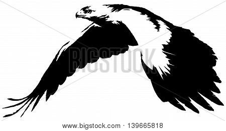 black and white paint draw eagle bird illustration