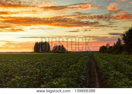 The midsummer sun sets over the potato fields of the Northern Finland. The sun colors the clouds in different colors beautifully.