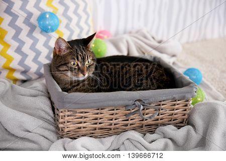 Cute grey cat in wicker basket