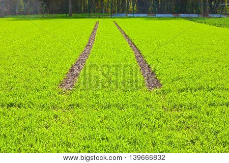 Tire Path In Field