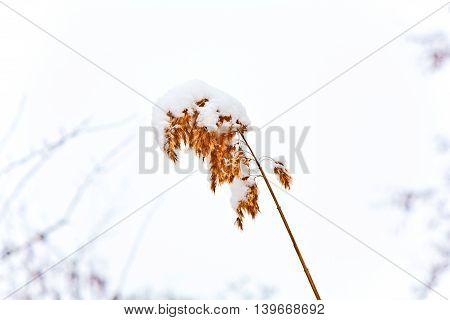 detail of tree leaf  in winter landscape