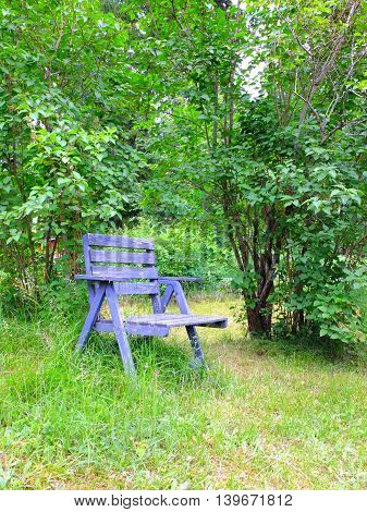 An old rustic blue chair in garden. Overgrown plants.