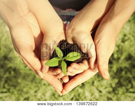 Child and adult holding soil and plant in hands outdoor