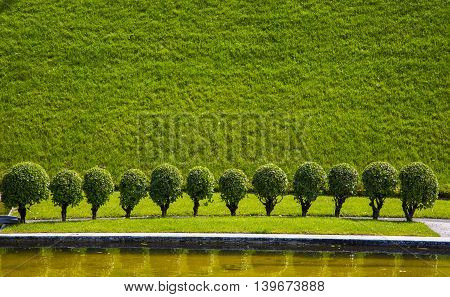 green grass and shrubs with green leaves. background texture