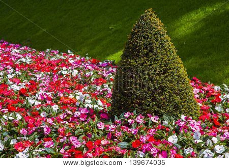 red and white flowers on green grass illuminated by the sun