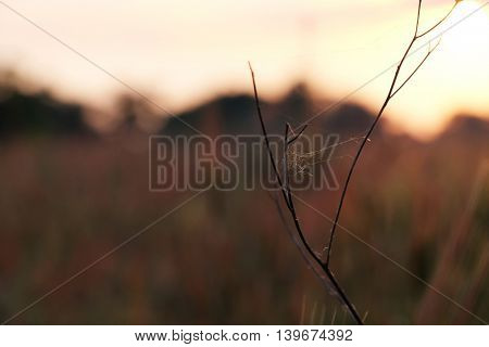 Branch with spiderweb on sunrise sky background
