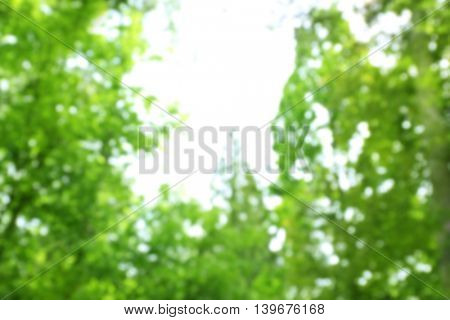 Blurred treetops on blue sky background