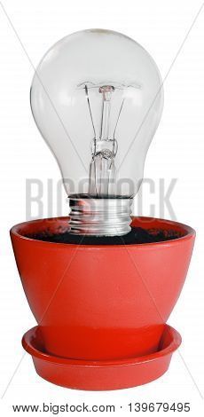 bulb growing in a red flowerpot isolated on white