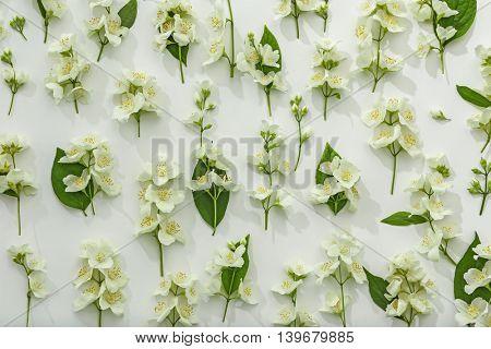 Fresh jasmine flowers on white background