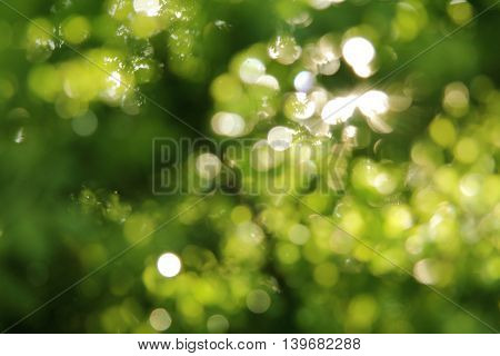 natural texture background blur foliage with sunbeams