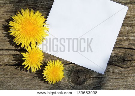 sunny flowers dandelions and clean card for inscriptions lie on an old wooden surface
