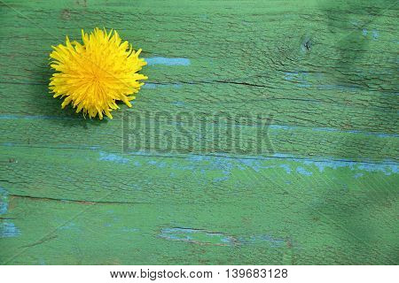 yellow dandelion on old wooden surface top view