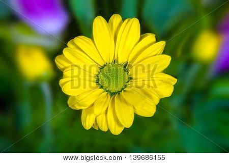 a yellow flower image resembling a daisy on a green background