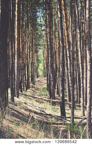 vintage forest background. beautiful wild natural background