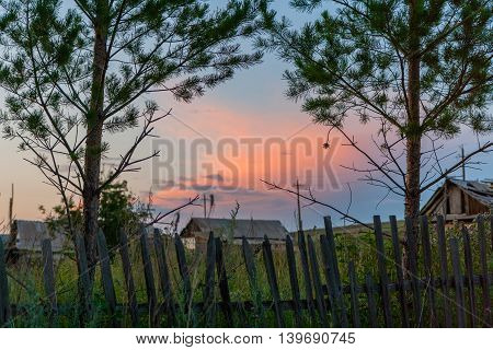 Old fence pine and rural landscape and sunset.