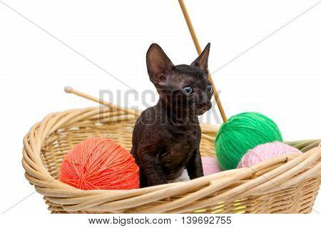 Black kitten in a basket of wool for knitting