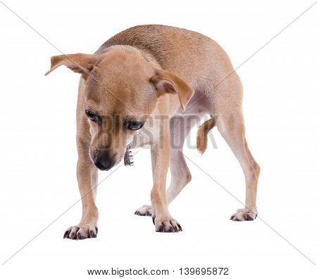 Cute baby dog with sad eyes isolated