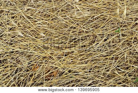 A background of dry dying field grass