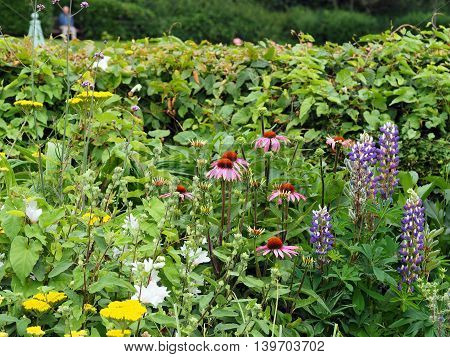 Flower border in a park in summer