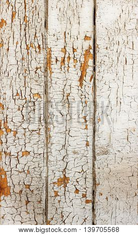 Vintage or grungy white background of natural wood or wooden old texture as a retro pattern layout.