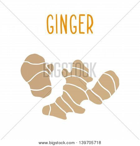 Ginger root isolated on white. Vector hand drawn illustration