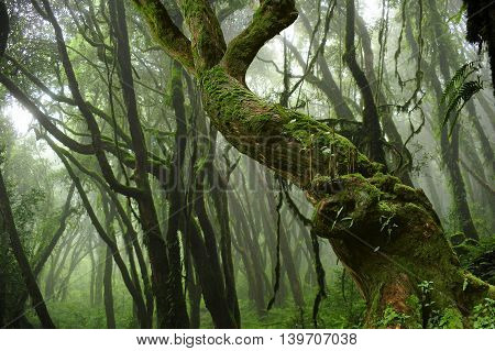 Nepal tropical jungle in the early hours of the morning with mist background
