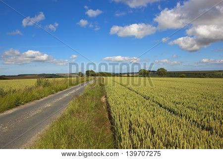 Rural Road With Wheat Field