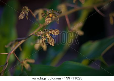 Photo Green Tropycal Orchid on the Blurred background. Wild Nature Flores. Horizontal Picture