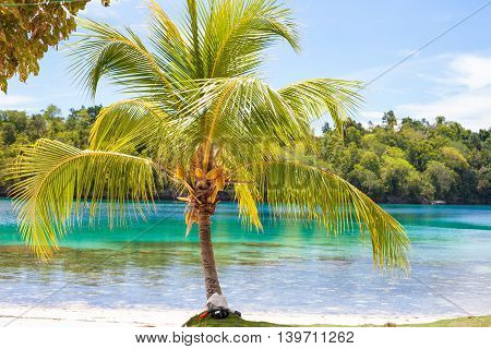 Photo Untouched Tropical Beach in Bali Island. Palm with fruits. Vertical Picture. Fishboat Blurred Background. Snorkeling Equipment