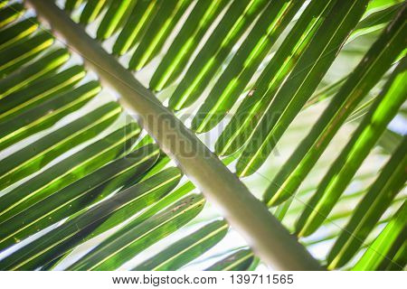 Macro photo Green Tropycal Palm on the Blurred background. Wild Nature Plant. Horizontal Picture. Closeup Image