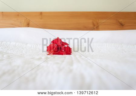 Red Orchid on the white background. Decoration badroom