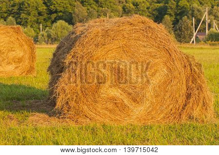 Haystack in a field, close-up on a background of forest