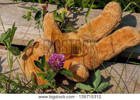 Lost toy bear alone and sadly lies in the grass, on a wooden platform, close up