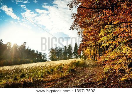 Beautiful autumn landscape with forest and blue sky