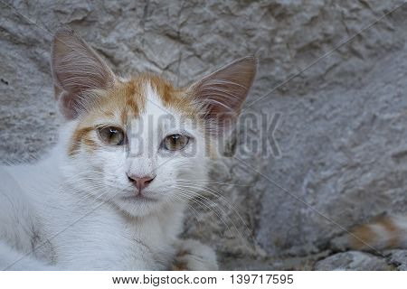 Shot of a young cat looking at the camera
