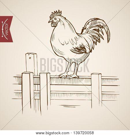 Engraving vintage hand drawn vector cock fence Sketch farm bird