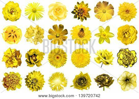 Collage Of Natural And Surreal Yellow Flowers 24 In 1: Peony, Dahlia, Primula, Aster, Daisy, Rose, G