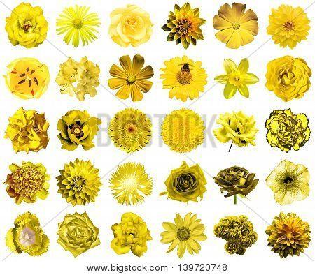 Collage Of Natural And Surreal Yellow Flowers 30 In 1: Peony, Dahlia, Primula, Aster, Daisy, Rose, G