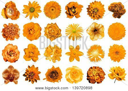 Collage Of Natural And Surreal Orange Flowers 24 In 1: Peony, Dahlia, Primula, Aster, Daisy, Rose, G