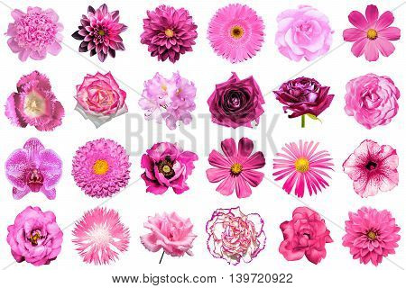 Collage Of Natural And Surreal Pink Flowers 24 In 1: Peony, Dahlia, Primula, Aster, Daisy, Rose, Ger