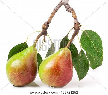 Two red pears with leaves on a branch isolated on white background
