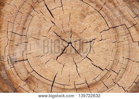old tree cut down close up macro.
