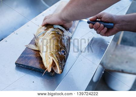 Big fresh trout fish lying on cutting board. Man hands wiuth knife. Norway.