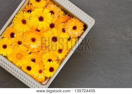 Bright Yellow Orange Flower Heads Pot Marigold Calendula Officinalis